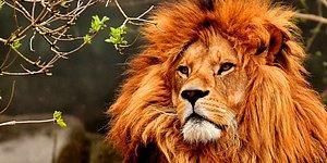 Тест: Сила какого животного заключена в вас?