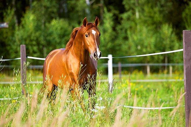7. Atlar kusamaz.