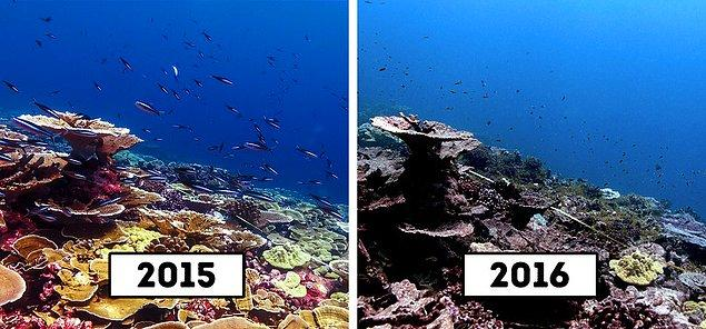 2. Avustralya'nın Christmas Adası'ndaki resif