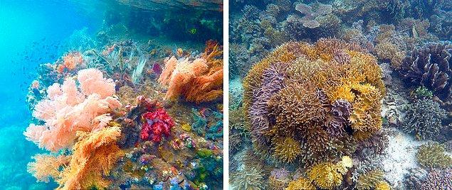 9. Raja Ampat Adaları / Endonezya