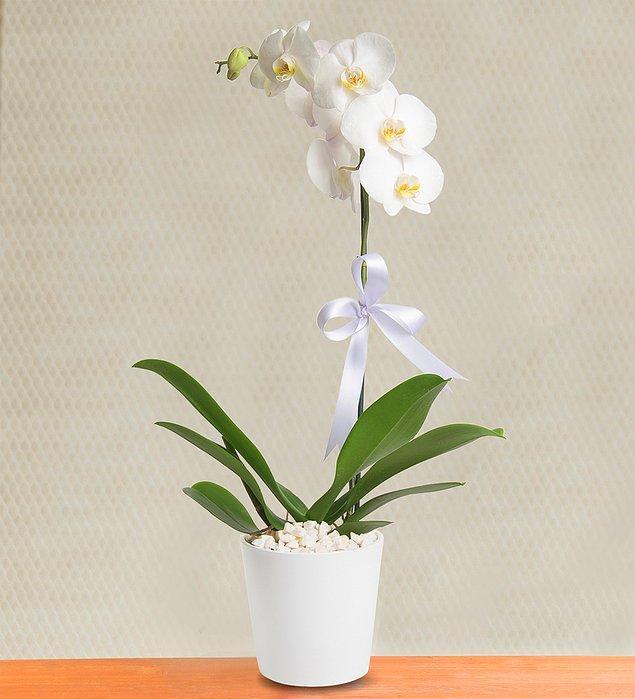 5. Ofise, okula ya da eve hediye olarak geldiğinde güzelliğiyle sadece sevgilinizi değil etrafındaki herkesi büyüleyebilen yegane çiçek; Orkide.