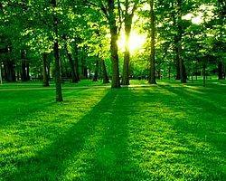Вашу личность олицетворяет зелёный цвет!