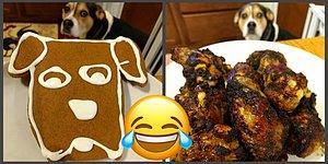 Собака и еда, или Как хозяин креативно подошел к съемкам любимого пса
