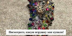 Бесстыдники: 15 проделок котов, хозяева которых решили поделиться своими историями в Instagram