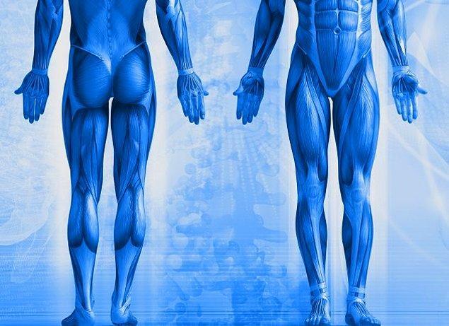 6. Uzay, kaslarımızı nasıl etkiler?