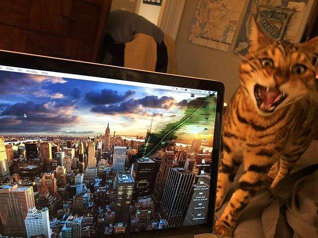 Кот в приступе гнева
