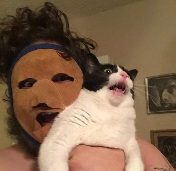 Этого кота можно понять