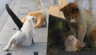 Japanese Photographer Captures Stray Cats Having Fun And They're Heart-Melting!