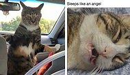 People Revealed The Weirdest Things Their Cats Do And You Can't Stop Laughing At!