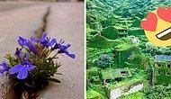 Природа - это сила, с которой нужно считаться (22 впечатляющих фото)