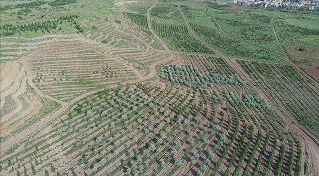 Candan, AOÇ arazisinin 781 bin metrekaresinde daha plan değişiklikleri ve kiralama yapıldığını, inşaat alanlarıyla birlikte bunun bir milyon metrekareyi bulduğunu belirtti.
