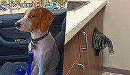 20 Funniest Moments When Pets Realized They Were Going To The Vet!