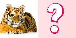 Тест: Ваш выбор животного поведает ваши секретные способности