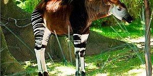 Если вы пройдете этот тест на знание названий редких животных, то вас точно можно назвать зоологом!