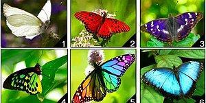 Тест: Выбрав самую красивую бабочку, вы узнаете все о своем характере