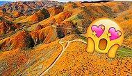 В Калифорнии суперблум: 20+ фото, запечатливших уникальное чудо природы