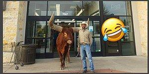 На заявление зоомагазина о том, что они впустят внутрь любого зверя, этот мужчина приволок быка