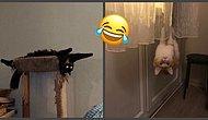 """""""Мой кот сломался"""", или Очередные фото странных, но смешных повадок домашних питомцев"""
