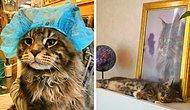 30 милых фото, которые докажут, что коты тоже могут быть «хорошими мальчиками»