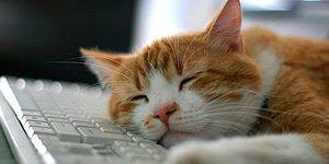 Тест: Если вы сможете дать правильные ответы на все вопросы в этом тесте о кошках, то вы явно знаете этих особенных животных