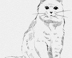 Как правило, животных рисуют отзывчивые и добрые люди