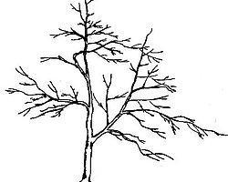 Как правило, нарисованные деревья выдают эго и амбиции людей