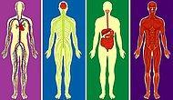 Тест: Если сможете определить, где правда, а где ложь в этом тесте на знание человеческого тела, то вы случаем не врач?