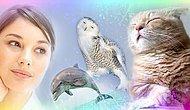 Тест: Каким животным вы будете в следующей жизни?