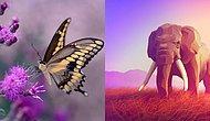 Тест: Вы слоник или бабочка? Позвольте нам угадать ваш вес всего за 7 вопросов