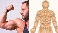 Анатомический тест: Как хорошо вы знаете свои мышцы?