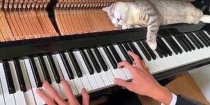 Минутка милоты: Спящую на пианино кошку совсем не смущает громкая музыка и поднимающие ее клавиши