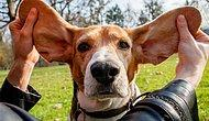 10 добрейших пород собак, которые отлично ладят с детьми