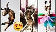 30 фото танцующих котиков, у которых можно поучиться крутым движениям, прежде чем идти в клуб