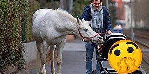 Знакомьтесь с белоснежной лошадью из Франкфурта, которая гуляет сама по себе: 9 фото