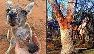 А спонсором смеха в данном посте выступают животные: 40+ фото