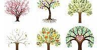 Тест: Дерево, к которому вас тянет, раскроет вашу доминантную черту характера
