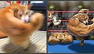 Зверские разборки: Заснувший лисенок и взмахнувшая хвостом собака стали предметами очередного баттла