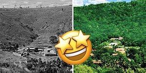 Было бы желание: Семейная пара из Бразилии посадила 2 миллиона деревьев за 20 лет, доказав, что помочь планете может каждый