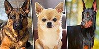 Тест: Какой породы собакой вы бы были, если судить по знаку зодиака?