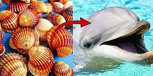 Тест: Выберите ракушки и узнайте, кто вы на самом деле - добрый дельфин или кровожадная акула!