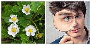 Тест: Если вы любите цветущие весенние растения, то вам точно не составит труда набрать в этом тесте 12/12
