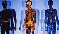 Тест: Вы знаете свое тело как никто другой, если сможете набрать 12/12 в тесте на знание анатомии человека