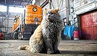 Кошка, которая будто бы вымазалась в грязи, но нет: это ее натуральный окрас :)