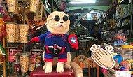 Пополнение среди супергероев: Кот из Вьетнама в костюме персонажей Марвел готов сражаться в команде Мстителей