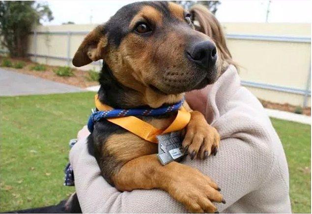 4. Koşucuların yanında maratona katılan bu tatlı köpek de madalya almış.