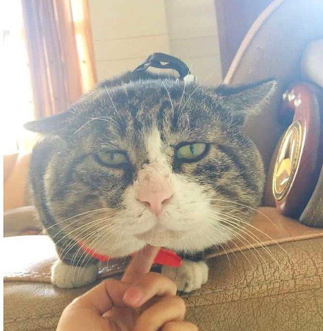 Ah Fei son dönemin en fenomen kedisi.