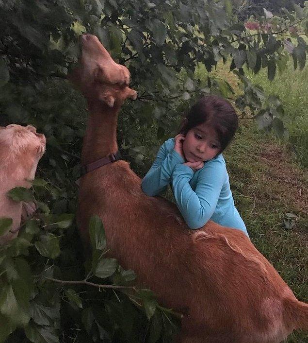 17. Keçilerle düşüncelere dalmış bir melek.
