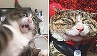 Король драмы: Кота из Китая обсуждает вся Сеть, потому что выражения его «лица» - это что-то :) (17 фото)
