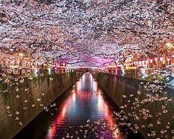 Вам нужно отправиться в Токио (Япония)!