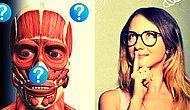 Если вы любите и знаете свое тело, то пройти этот тест по анатомии на 10/12 не составит для вас никакого труда!